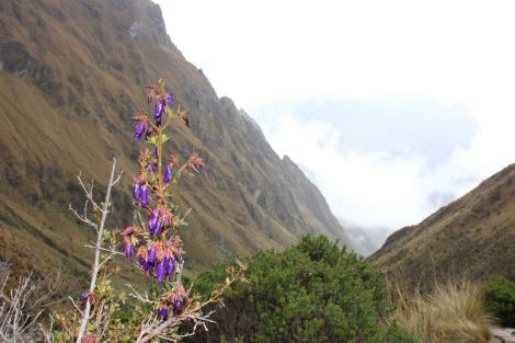 Flowers, hummingbirds, llamas and waterfalls spread throughout the Andes add so much beauty to the already picturesque backdrop.